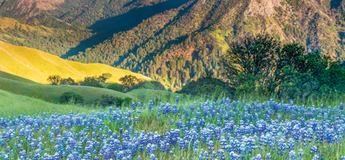 Land Back:  Environmental Justice